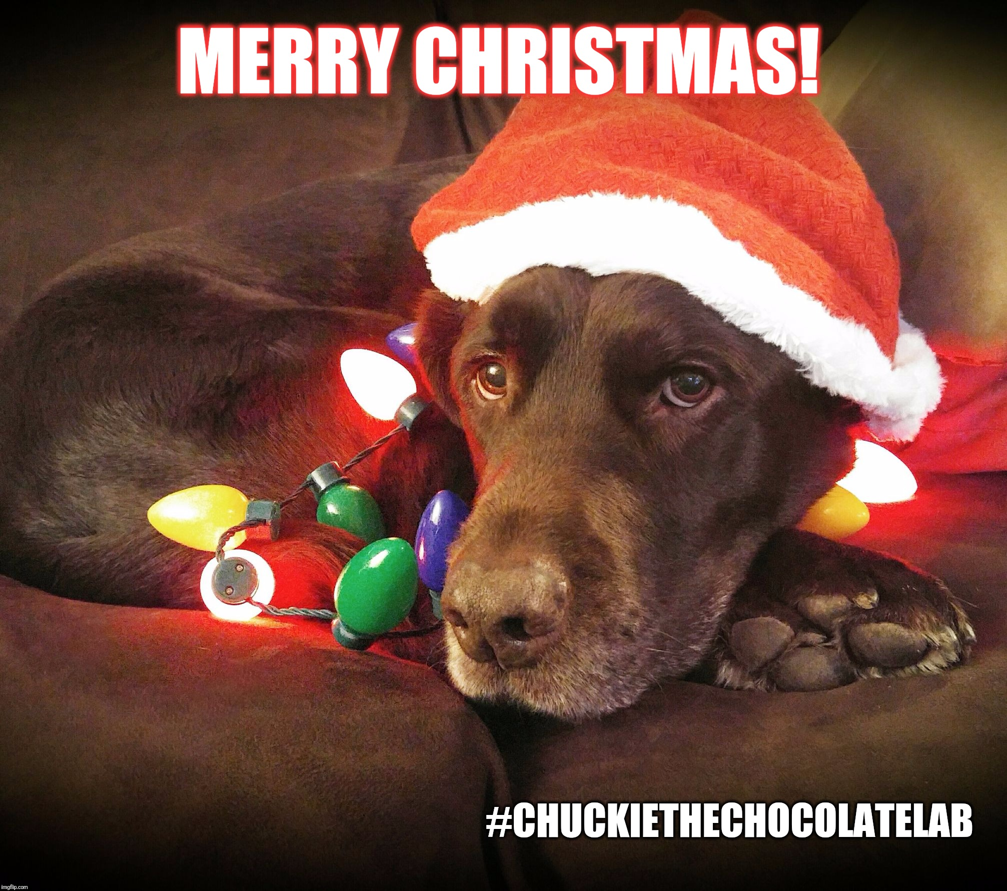 Dog Christmas Meme.Merry Christmas Imgflip