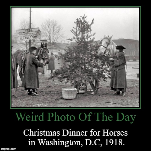 What Are They Having? | Weird Photo Of The Day | Christmas Dinner for Horses in Washington, D.C, 1918. | image tagged in funny,demotivationals,weird,photo of the day,christmas,horses | made w/ Imgflip demotivational maker