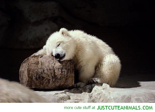 Sleepy bear Blank Template - Imgflip