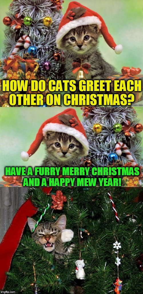 Merry Christmas Puns.Are You Kitten Me Right Meow With These Christmas Puns
