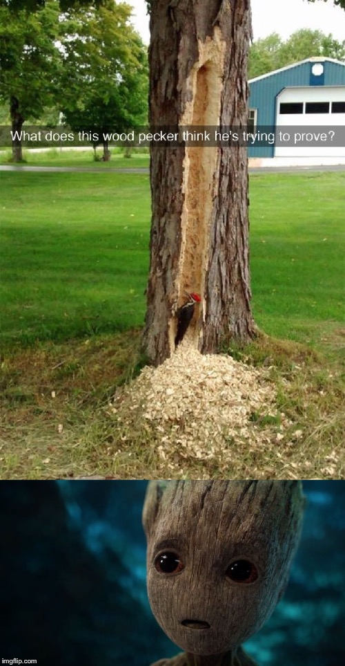 Groot's Worst Nightmare  | image tagged in groot's worst nightmare,memes,groot | made w/ Imgflip meme maker