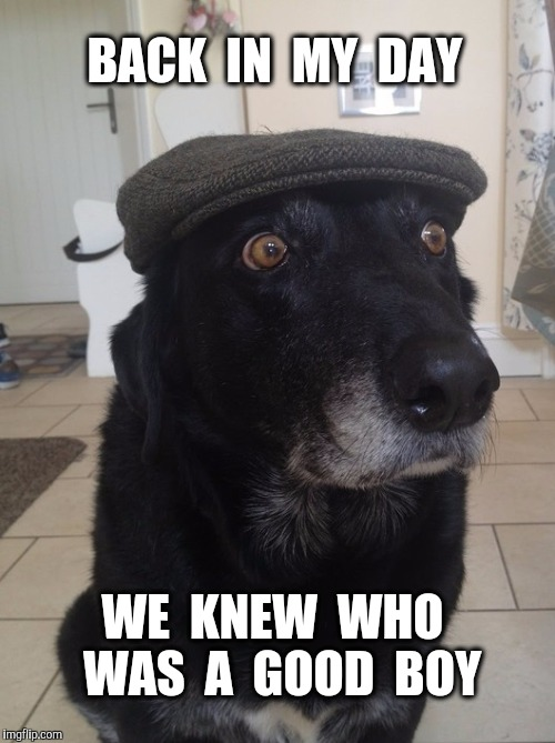 Back In My Day Dog | BACK  IN  MY  DAY WE  KNEW  WHO  WAS  A  GOOD  BOY | image tagged in back in my day dog,good boy,dog | made w/ Imgflip meme maker