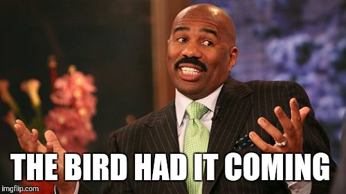 Steve Harvey Meme | THE BIRD HAD IT COMING | image tagged in memes,steve harvey | made w/ Imgflip meme maker