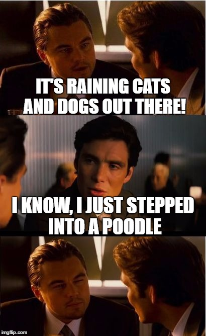 Inception Meme | IT'S RAINING CATS AND DOGS OUT THERE! I KNOW, I JUST STEPPED INTO A POODLE | image tagged in memes,inception | made w/ Imgflip meme maker