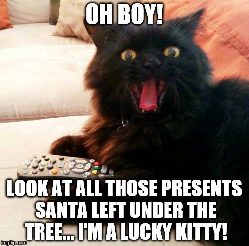 Oh Boy! Cat fell asleep but when he awoke on Christmas morning was he in for a big surprise |  OH BOY! LOOK AT ALL THOSE PRESENTS SANTA LEFT UNDER THE TREE... I'M A LUCKY KITTY! | image tagged in oh boy cat,memes,santa,christmas,merry christmas,cats | made w/ Imgflip meme maker