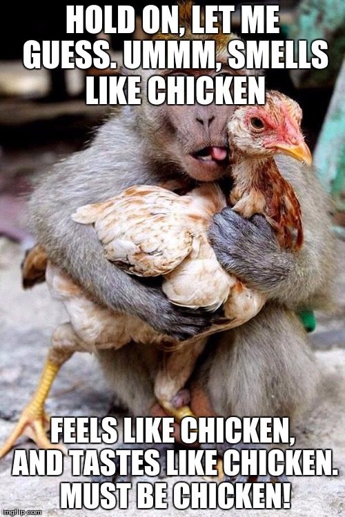 monkey chicken | HOLD ON, LET ME GUESS. UMMM, SMELLS LIKE CHICKEN FEELS LIKE CHICKEN, AND TASTES LIKE CHICKEN. MUST BE CHICKEN! | image tagged in monkey chicken | made w/ Imgflip meme maker