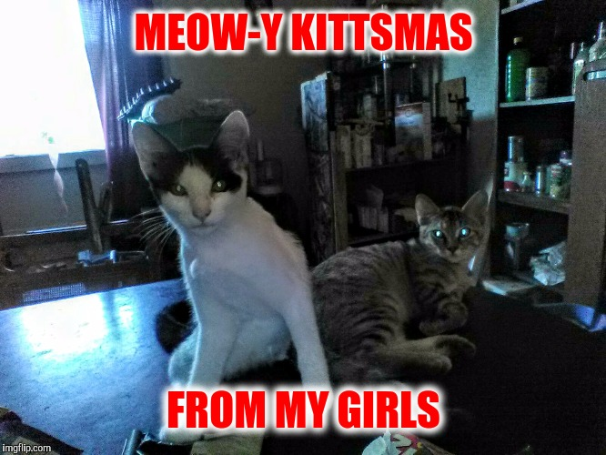 MEOW-Y KITTSMAS FROM MY GIRLS | made w/ Imgflip meme maker