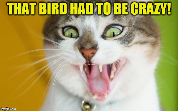 THAT BIRD HAD TO BE CRAZY! | made w/ Imgflip meme maker