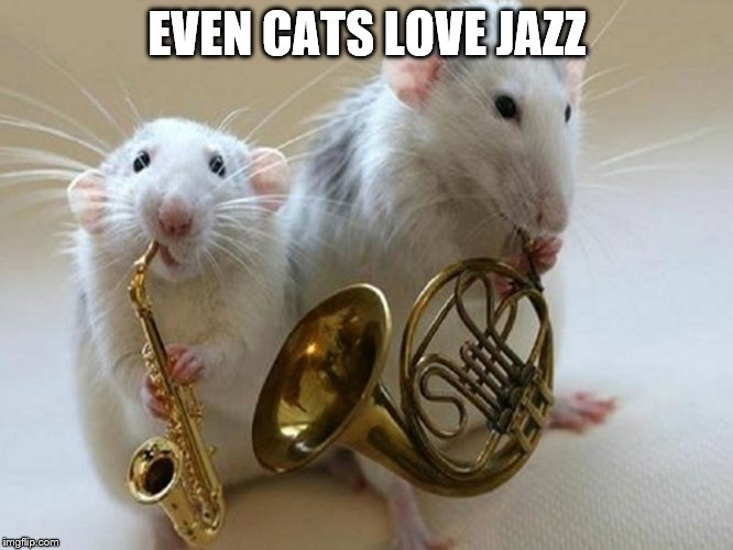 EVEN CATS LOVE JAZZ | image tagged in jazz | made w/ Imgflip meme maker