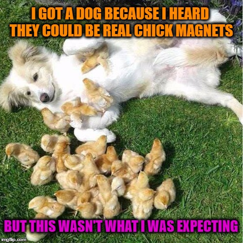 Chick Magnet | I GOT A DOG BECAUSE I HEARD THEY COULD BE REAL CHICK MAGNETS BUT THIS WASN'T WHAT I WAS EXPECTING | image tagged in memes,funny,wmp,chick magnet | made w/ Imgflip meme maker