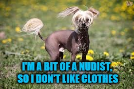I'M A BIT OF A NUDIST, SO I DON'T LIKE CLOTHES | made w/ Imgflip meme maker