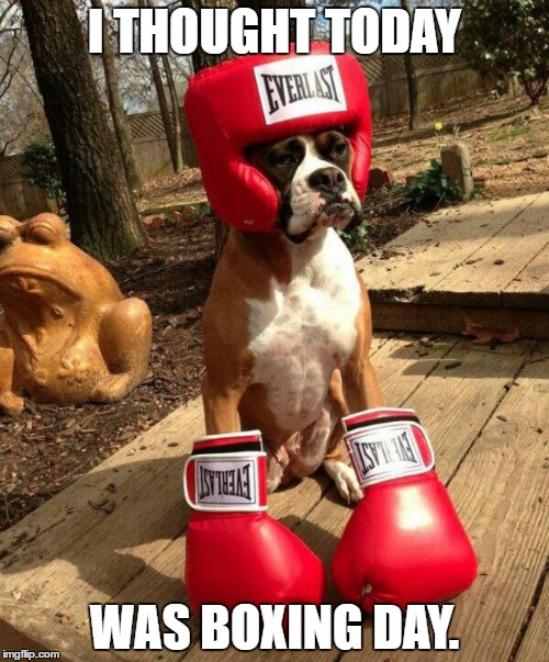 This dog tried so hard. | I THOUGHT TODAY WAS BOXING DAY. | image tagged in boxerdoggo,imgflip,memes,dog,funny,boxing | made w/ Imgflip meme maker