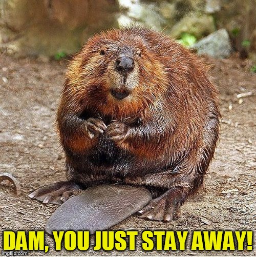 DAM, YOU JUST STAY AWAY! | made w/ Imgflip meme maker