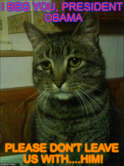 Depressed Cat Meme - Imgflip