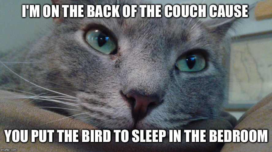 Why did you close the bedroom door? | I'M ON THE BACK OF THE COUCH CAUSE YOU PUT THE BIRD TO SLEEP IN THE BEDROOM | image tagged in first world cat problems | made w/ Imgflip meme maker
