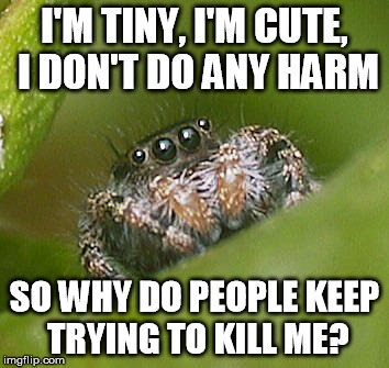 Misunderstood Spider | I'M TINY, I'M CUTE, I DON'T DO ANY HARM SO WHY DO PEOPLE KEEP TRYING TO KILL ME? | image tagged in animals,misunderstood spider,cute | made w/ Imgflip meme maker