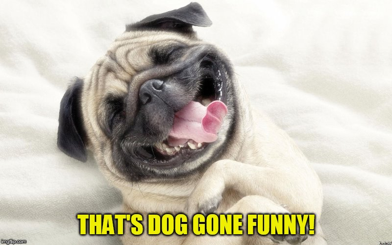 THAT'S DOG GONE FUNNY! | made w/ Imgflip meme maker