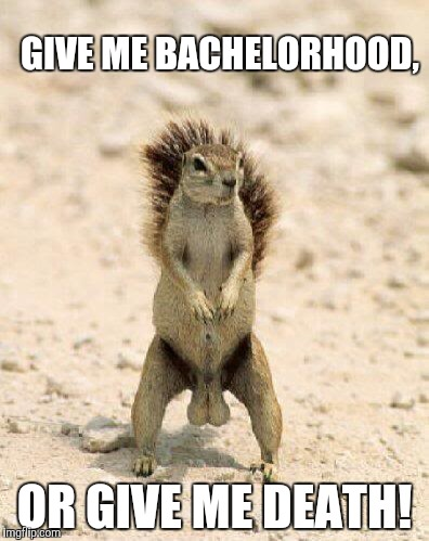Squirrel, deez nuts | GIVE ME BACHELORHOOD, OR GIVE ME DEATH! | image tagged in squirrel,deez nuts | made w/ Imgflip meme maker