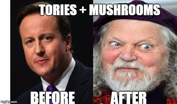 TORIES + MUSHROOMS BEFORE             AFTER | image tagged in tories,mushrooms,cameron | made w/ Imgflip meme maker