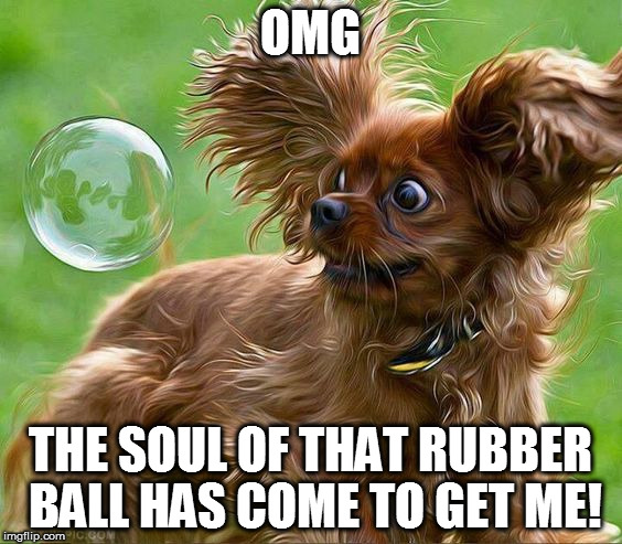 Love startled dogs. | OMG THE SOUL OF THAT RUBBER BALL HAS COME TO GET ME! | image tagged in dog,memes | made w/ Imgflip meme maker