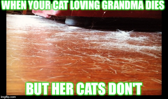 Cat loving grandmother | WHEN YOUR CAT LOVING GRANDMA DIES BUT HER CATS DON'T | image tagged in cats,grandma,hair | made w/ Imgflip meme maker