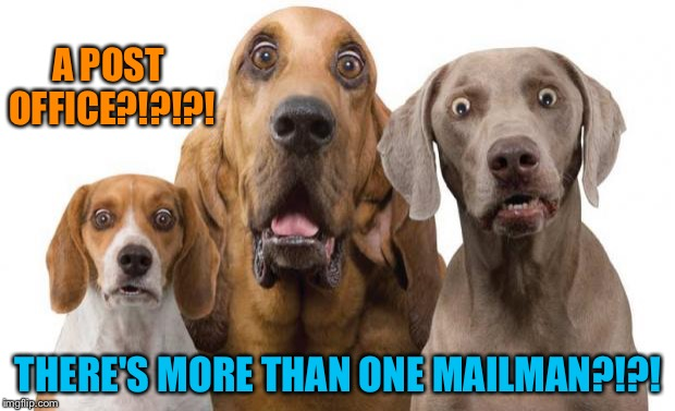 shocked dogs | A POST OFFICE?!?!?! THERE'S MORE THAN ONE MAILMAN?!?! | image tagged in shocked dogs | made w/ Imgflip meme maker