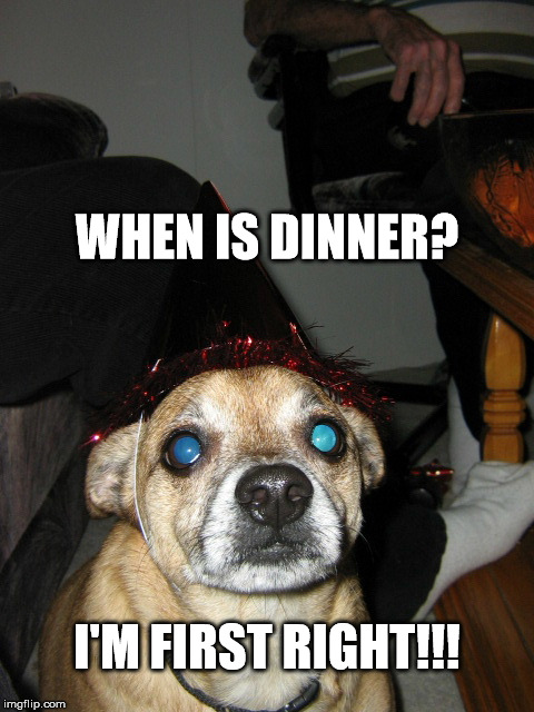 Hungry Chiquaqua | WHEN IS DINNER? I'M FIRST RIGHT!!! | image tagged in disapointed dog,dog food,dogs | made w/ Imgflip meme maker