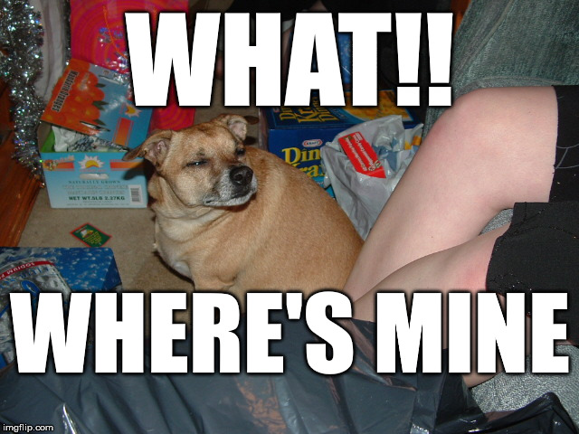 Where's my Present! |  WHAT!! WHERE'S MINE | image tagged in grumpy dog,skeptical dog | made w/ Imgflip meme maker