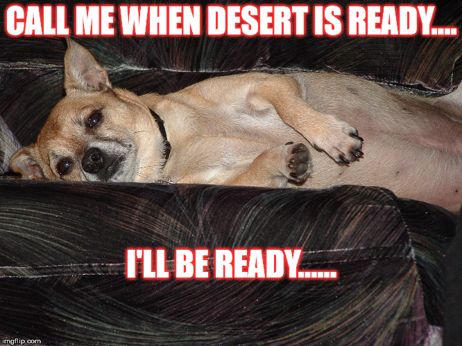 Lazy Dog Dessert |  CALL ME WHEN DESERT IS READY.... I'LL BE READY...... | image tagged in lazy dog,dessert,dog nap | made w/ Imgflip meme maker