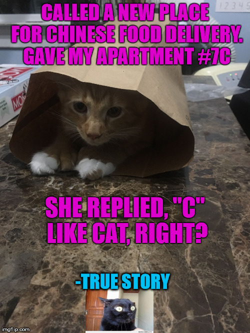 "It didn't hit me until after I hung up the phone | CALLED A NEW PLACE FOR CHINESE FOOD DELIVERY. GAVE MY APARTMENT #7C SHE REPLIED, ""C"" LIKE CAT, RIGHT? -TRUE STORY 