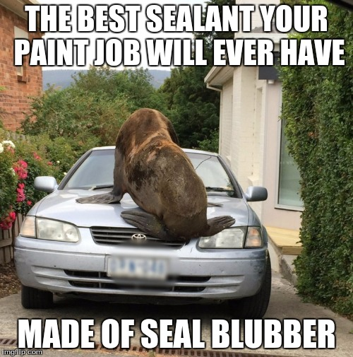 THE BEST SEALANT YOUR PAINT JOB WILL EVER HAVE MADE OF SEAL BLUBBER | image tagged in seal on car | made w/ Imgflip meme maker