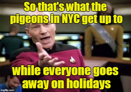 Picard Wtf Meme | So that's what the pigeons in NYC get up to while everyone goes away on holidays | image tagged in memes,picard wtf | made w/ Imgflip meme maker