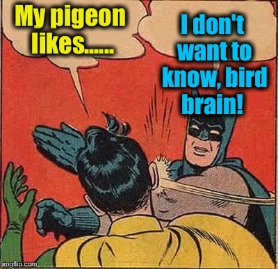 Batman Slapping Robin Meme | My pigeon likes...... I don't want to know, bird brain! | image tagged in memes,batman slapping robin | made w/ Imgflip meme maker