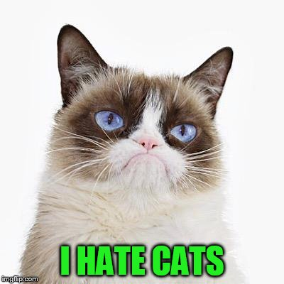 I HATE CATS | made w/ Imgflip meme maker