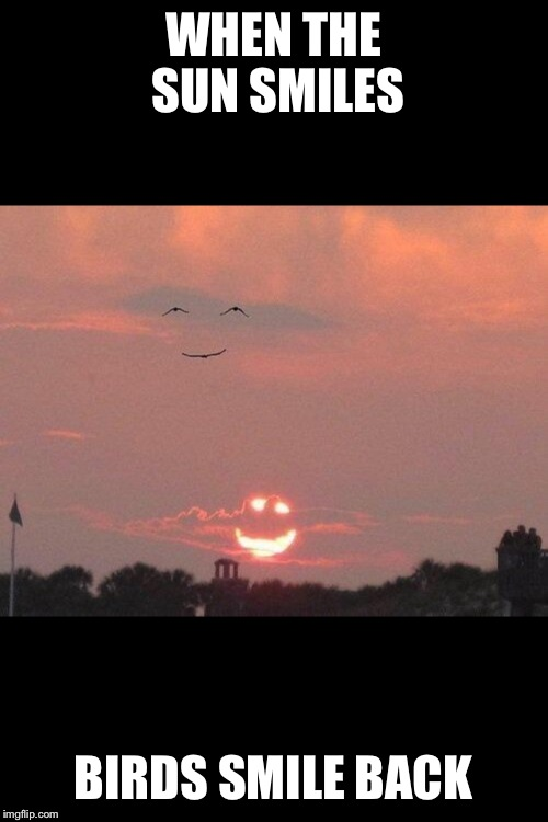 WHEN THE SUN SMILES BIRDS SMILE BACK | image tagged in memes,nature,sun,birds | made w/ Imgflip meme maker