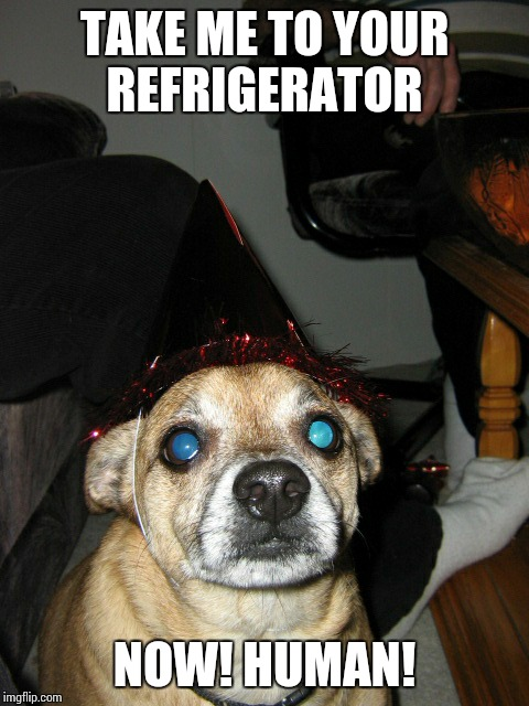 Take me to your refrigerator! !! | TAKE ME TO YOUR REFRIGERATOR NOW! HUMAN! | image tagged in disapointed dog,alien dog | made w/ Imgflip meme maker