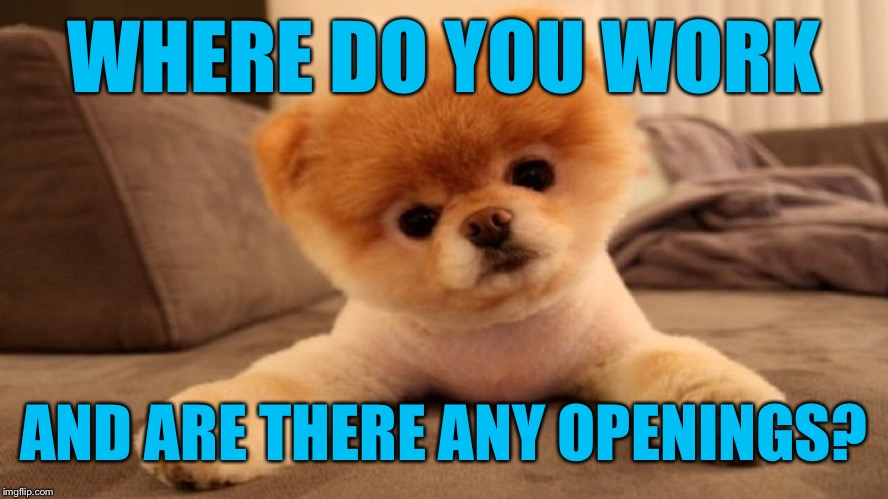 WHERE DO YOU WORK AND ARE THERE ANY OPENINGS? | made w/ Imgflip meme maker