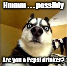 Hmmm . . . possibly Are you a Pepsi drinker? | image tagged in pissed husky | made w/ Imgflip meme maker