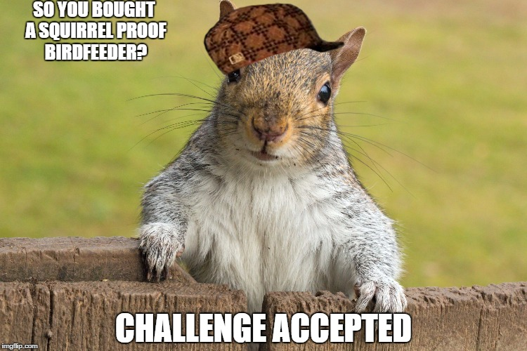1gyvn3 image tagged in advice giving squirrel,scumbag imgflip