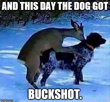 BUCKSHOT | AND THIS DAY THE DOG GOT BUCKSHOT. | image tagged in deer | made w/ Imgflip meme maker