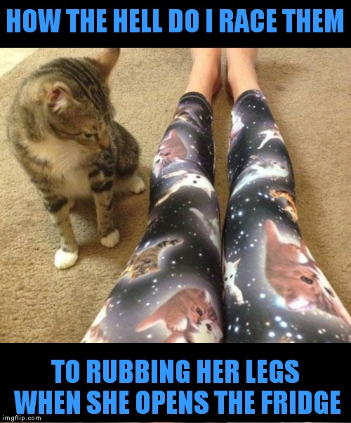 Some cats see competition everywhere... | HOW THE HELL DO I RACE THEM TO RUBBING HER LEGS WHEN SHE OPENS THE FRIDGE | image tagged in cats,competition,tights,meow | made w/ Imgflip meme maker