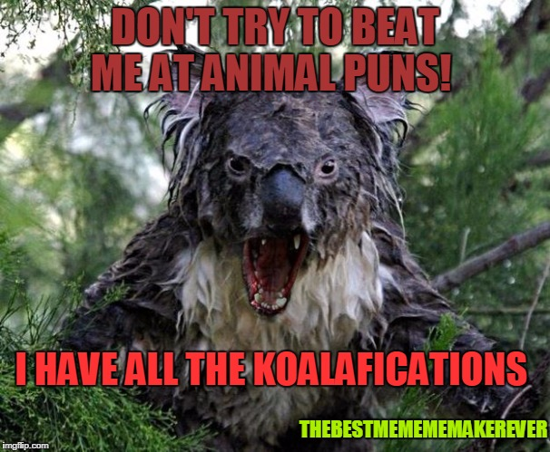 angry koala | DON'T TRY TO BEAT ME AT ANIMAL PUNS! THEBESTMEMEMEMAKEREVER I HAVE ALL THE KOALAFICATIONS | image tagged in angry koala | made w/ Imgflip meme maker