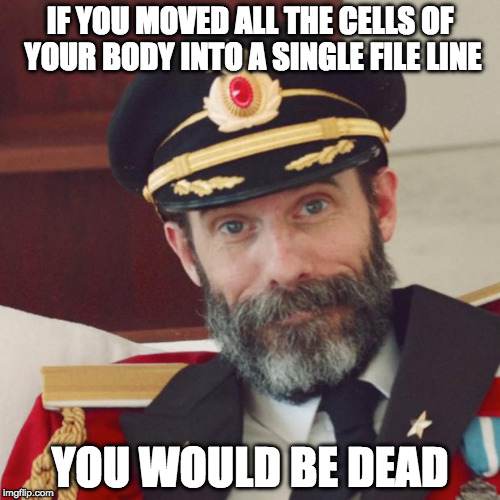 Captain Obvious |  IF YOU MOVED ALL THE CELLS OF YOUR BODY INTO A SINGLE FILE LINE; YOU WOULD BE DEAD | image tagged in captain obvious | made w/ Imgflip meme maker