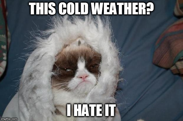 Grumpy Cat Cold Meme