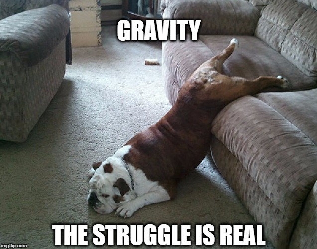 GRAVITY THE STRUGGLE IS REAL | image tagged in gravity dog | made w/ Imgflip meme maker