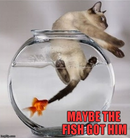MAYBE THE FISH GOT HIM | made w/ Imgflip meme maker