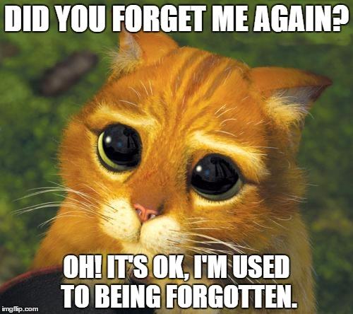 Cat Hat Dont Forget Me Meme Generator Imgflip