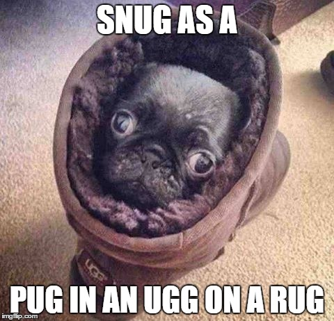 Pugly Lil Critter | SNUG AS A PUG IN AN UGG ON A RUG | image tagged in pug,pugs,pug life | made w/ Imgflip meme maker