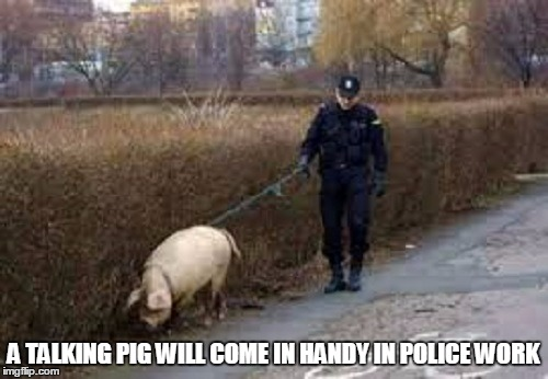 A TALKING PIG WILL COME IN HANDY IN POLICE WORK | made w/ Imgflip meme maker