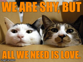 Moving cats | WE ARE SHY, BUT ALL WE NEED IS LOVE. | image tagged in moving cats | made w/ Imgflip meme maker